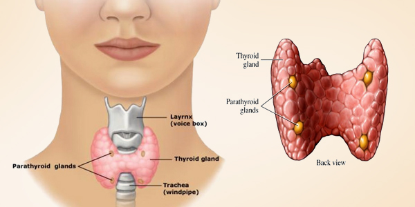 hypothyroidism-low-thyroid