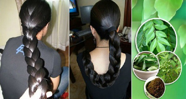 guava-leaves-can-100-stop-your-hair-loss-and-make-it-grow-like-crazy